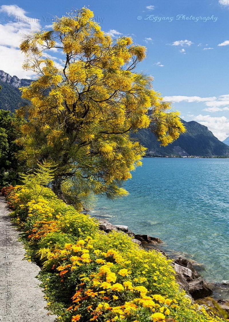 Promenade Fleuri Montreux
