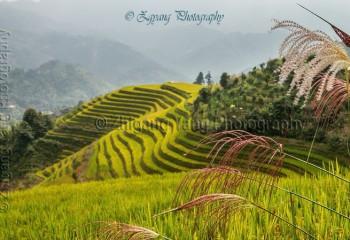 Longji Rice Terrace