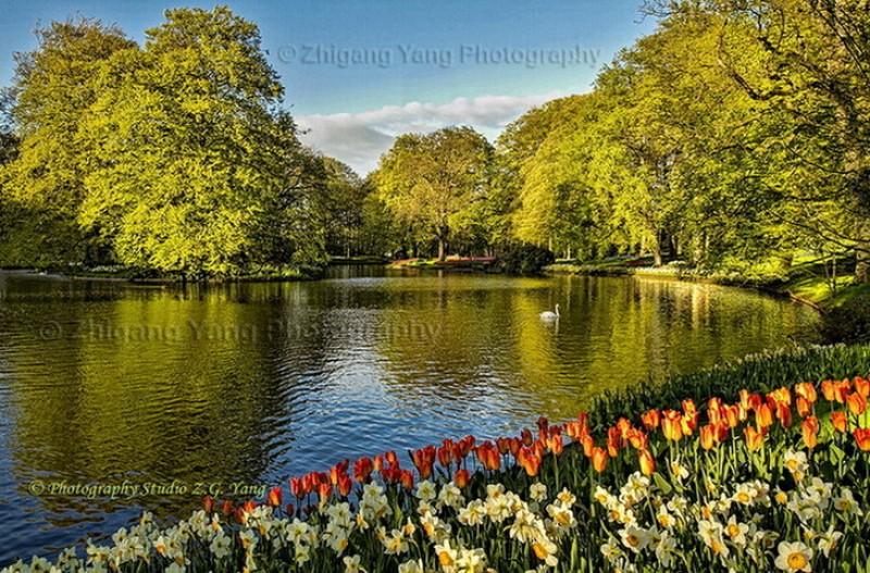 Tulips and Narcissus in Keukenhof